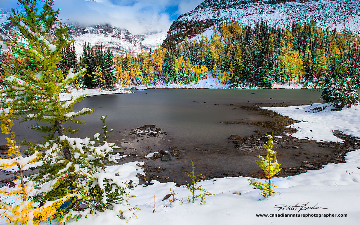 Schäffer Lake was partly frozen and surrounded by pine and larch trees by Robert Berdan ©
