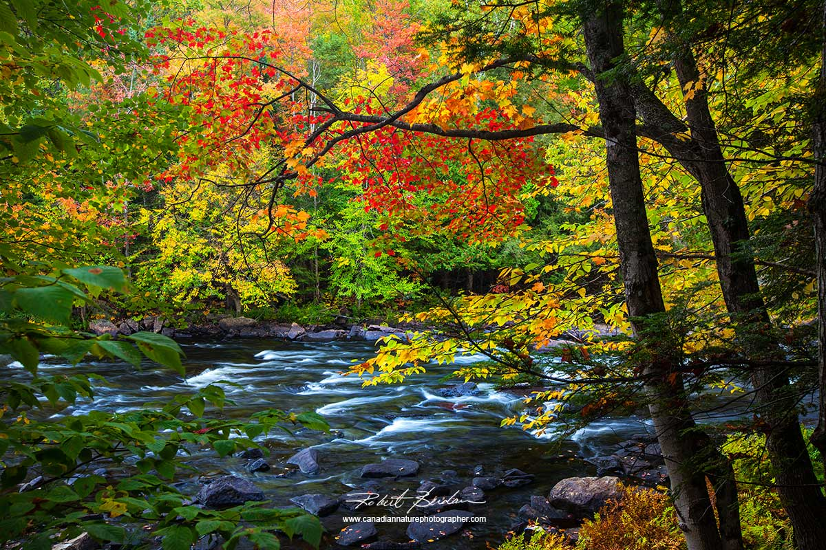 The Canadian Nature Photographer Central Canada