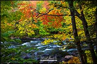 Oxtongue River in autumn near Algonquin Park Ontario by Robert Berdan
