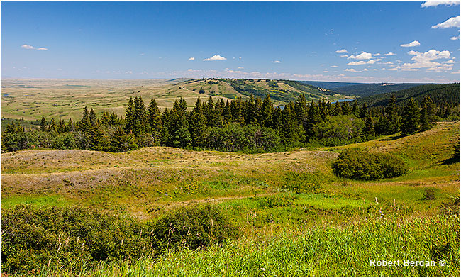 Reesor viewpoint Cypress Hills by Robert Berdan ©
