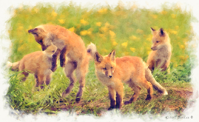 Filter Forge painting effect on baby foxes by Robert Berdan ©