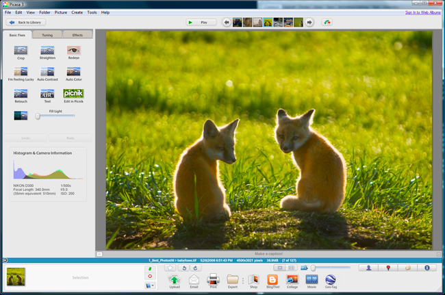 Screen shot of Picasa 3 showing enlarged image preview by Robert Berdan ©