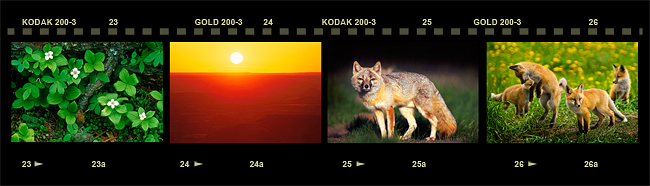 Film strip with photos by R. Berdan ©