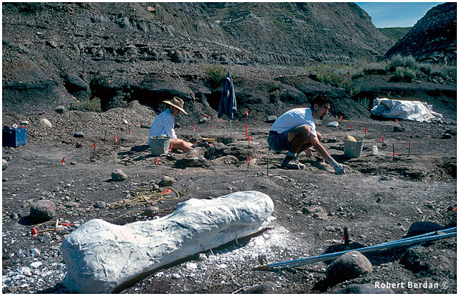 Digging for dinosaur bones, Badlands, Alberta by Robert Berdan ©