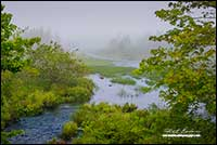 River along East coast Nova Scotia by Robert Berdan