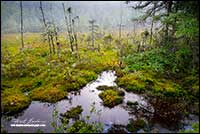 Muskeg near Spry Bay Nova Scotia by Robert Berdan