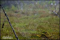 Spider web with dew near Spry Harbour Nova Scotia by Robert Berdan