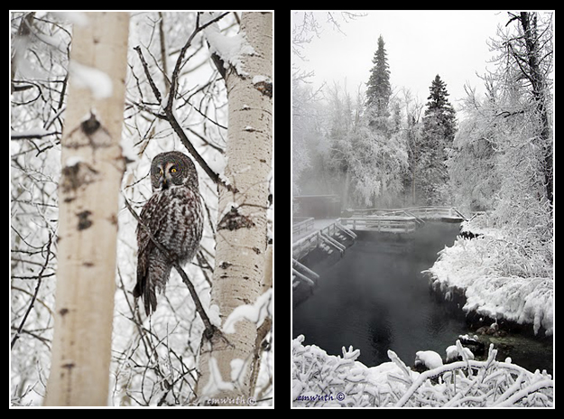 Great Gray Owl and Liard Hot Springs in Winter by Egan Wuth ©