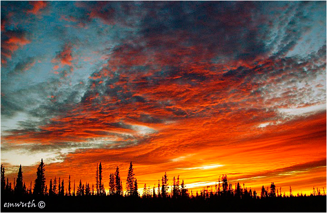 Boreal forest sunset by Egan Wuth ©