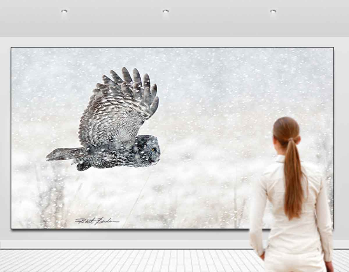 large owl photo in gallery by Robert Berdan