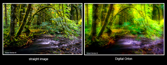 Photos of before and after photoshop impressionistic effect by Robert Berdan ©