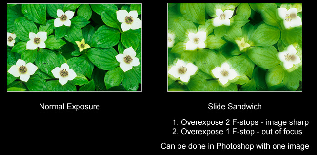 Photo showing slide sandwhich of two exposures by Robert Berdan