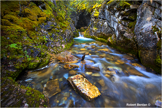 Small canyone and falls Galetea trail in Kananaskis by Robert Berdan ©