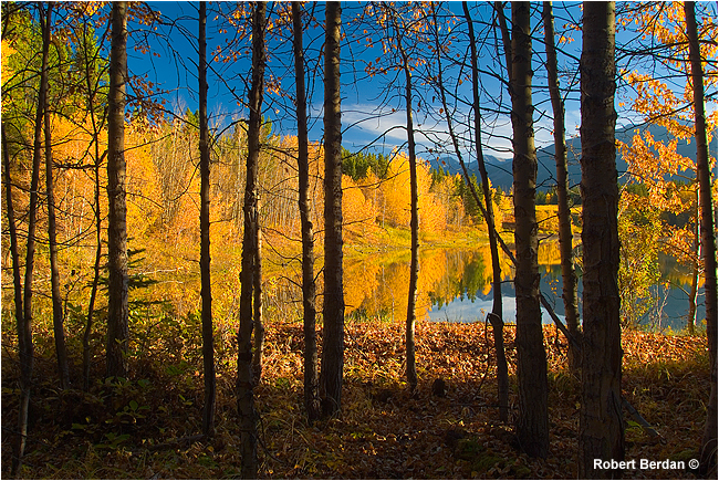 Looking through the trees at Wedge Pond Kananaskis by Robert Berdan