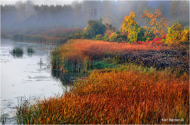 Marsh off Highway 400 by Karl Berdan ©