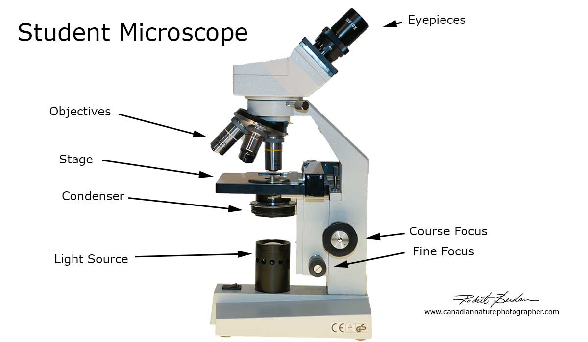 Home Microscopy Laboratory for Photomicrography -The ...