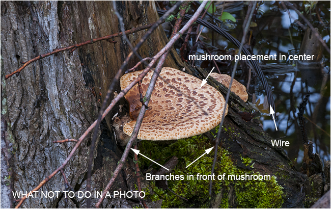 How not to photograph a mushroom R. Berdan ©