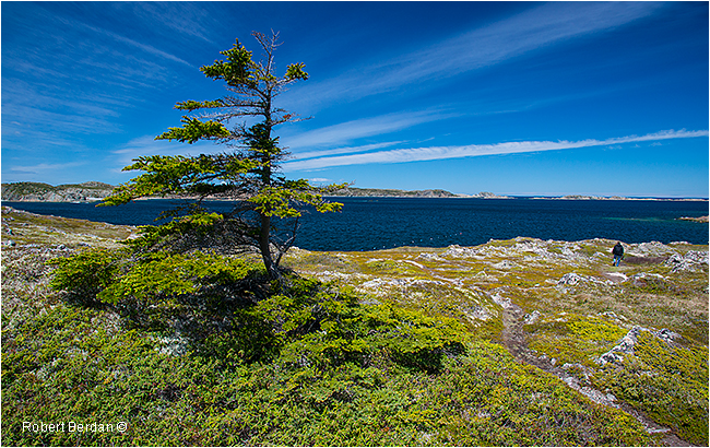 Hiking trail near Frensch's Bearch Newfoundland by Robert Berdan ©