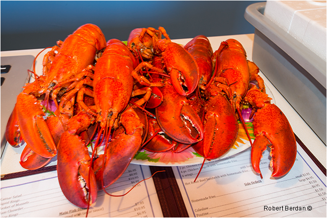 Plate of cooked Lobsters in Twillingate by Robert Berdan ©