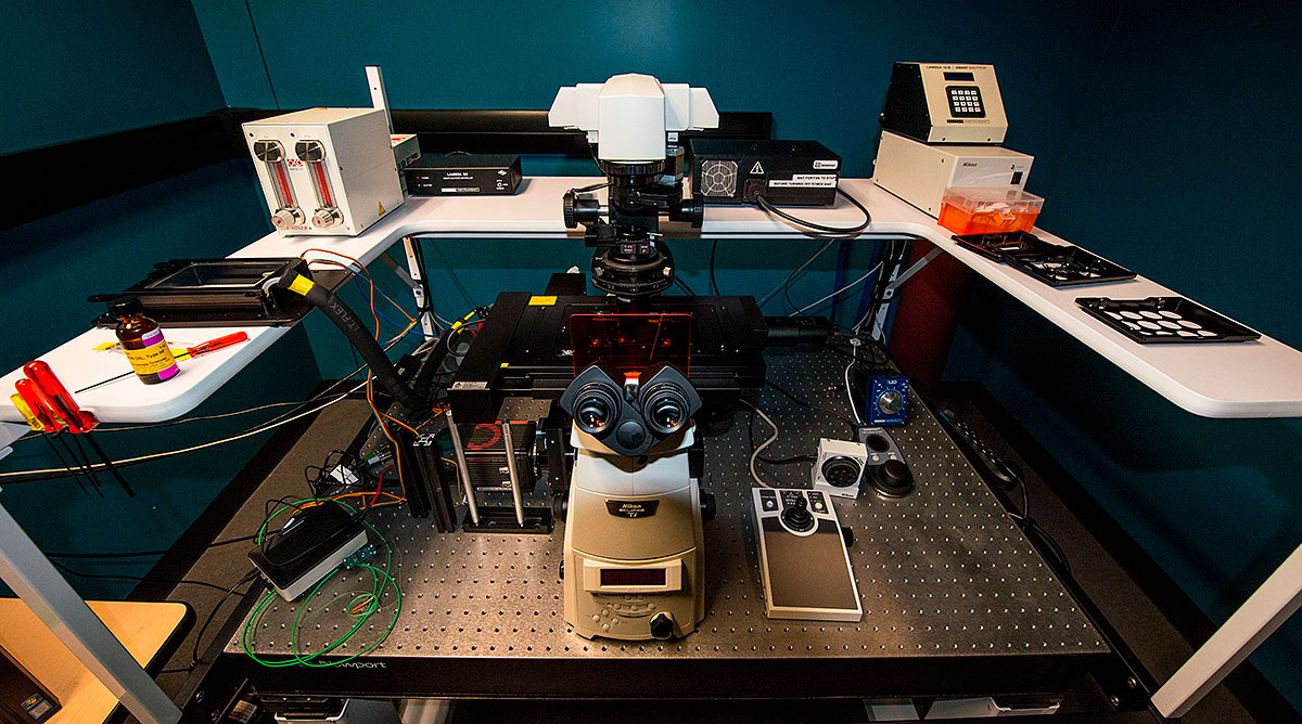 laser confocal microscope from the Microscopy facility at the University of Calgary Robert Berdan ©