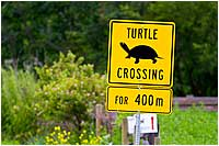 Turtle crossing sign by Robert Berdan ©