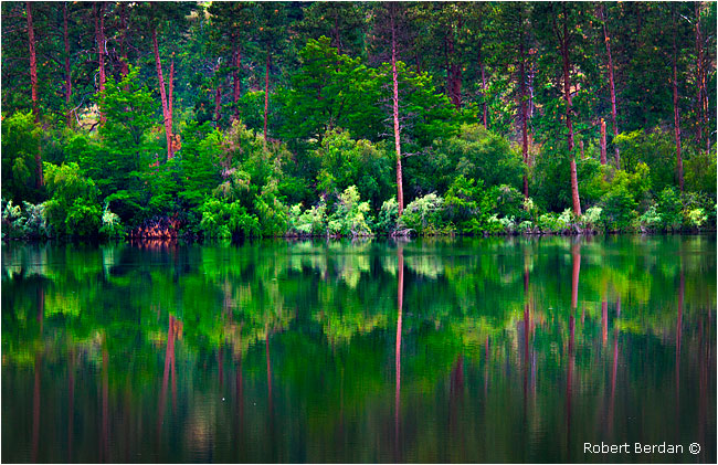 Pondersa pines and reflections at Vaseaux lake by Robert Berdan ©