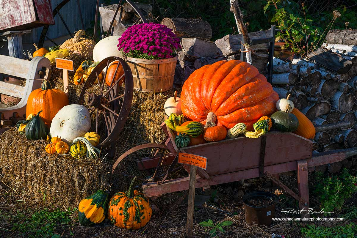 vegetable display in Perkinsfield, Ontario by Dr. Robert Berdan ©