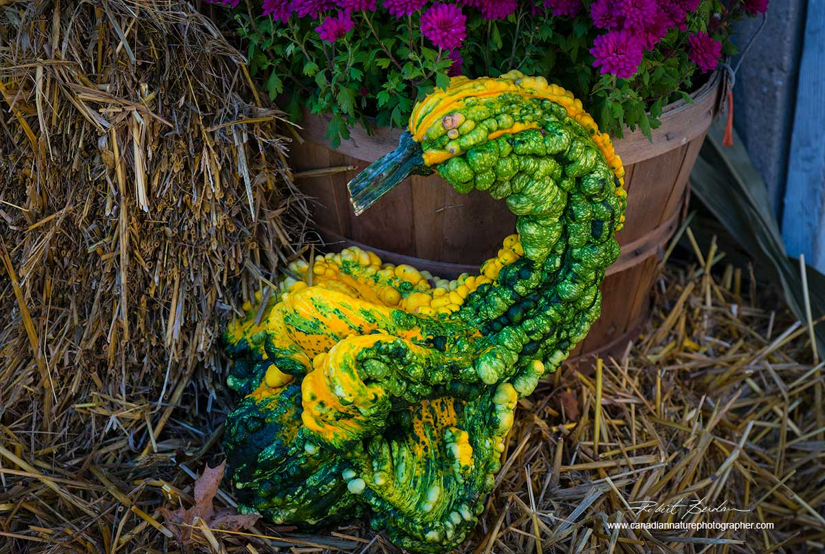 Unusual vegetable by Dr. Robert Berdan ©