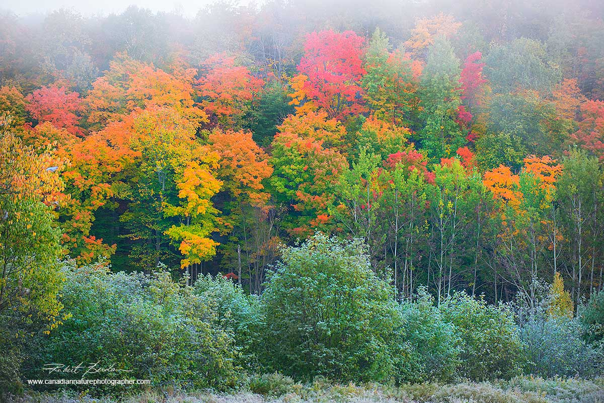 Fall coloours in Muskoka by Dr. Robert Berdan ©