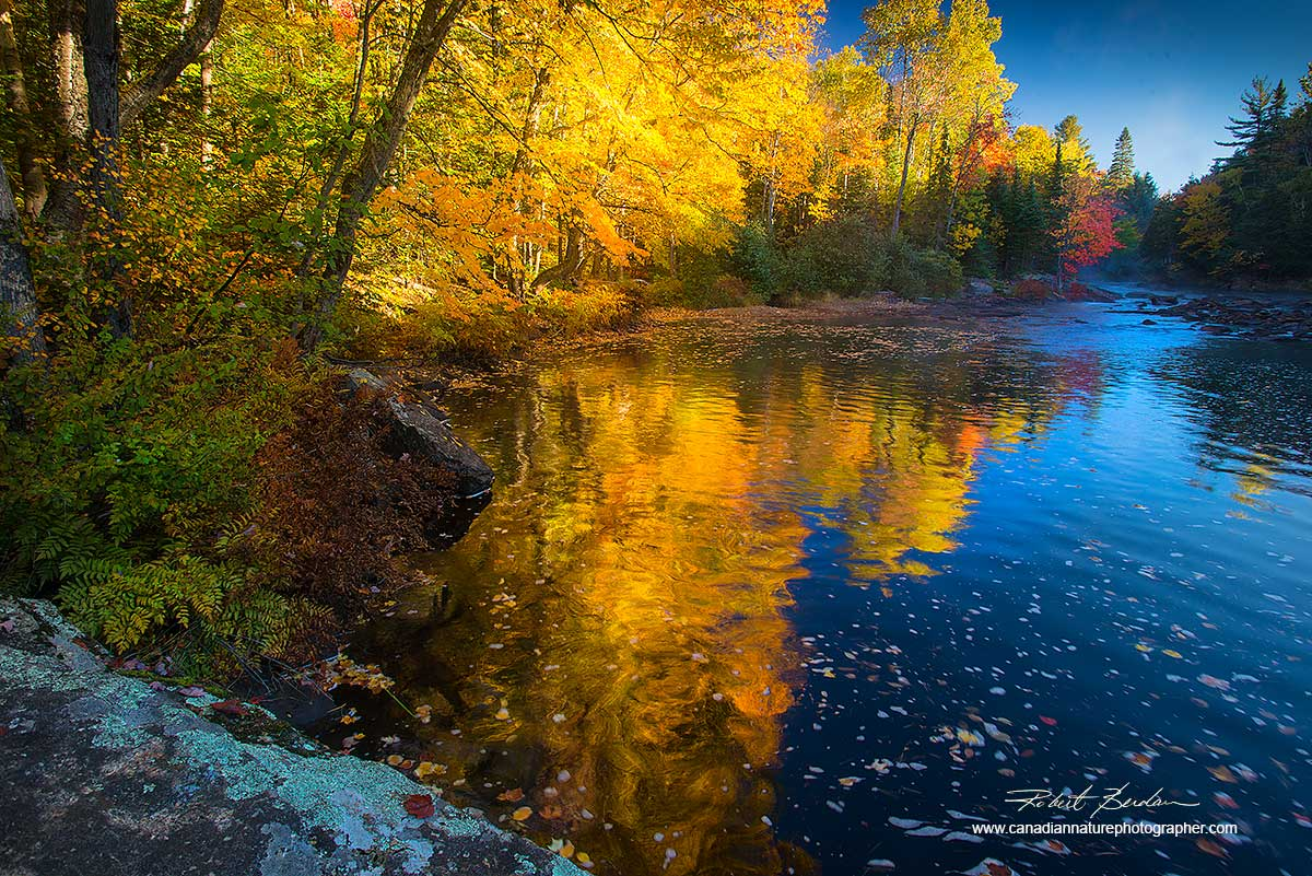 Oxtongue river Ontario by Dr. Robert Berdan ©