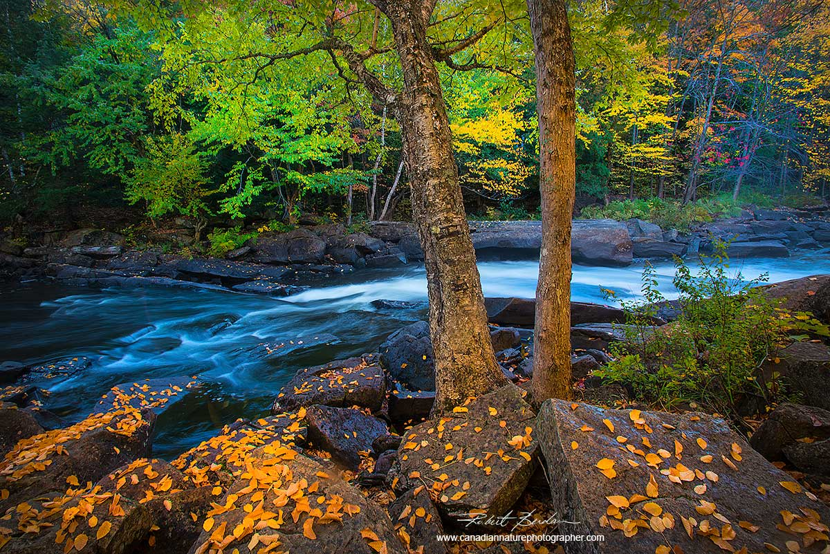 Oxtongue River in Autumn by Dr. Robert Berdan ©