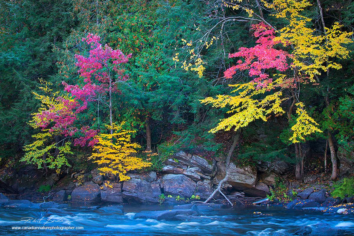 Oxtongue River with autumn colours by Dr. Robert Berdan ©