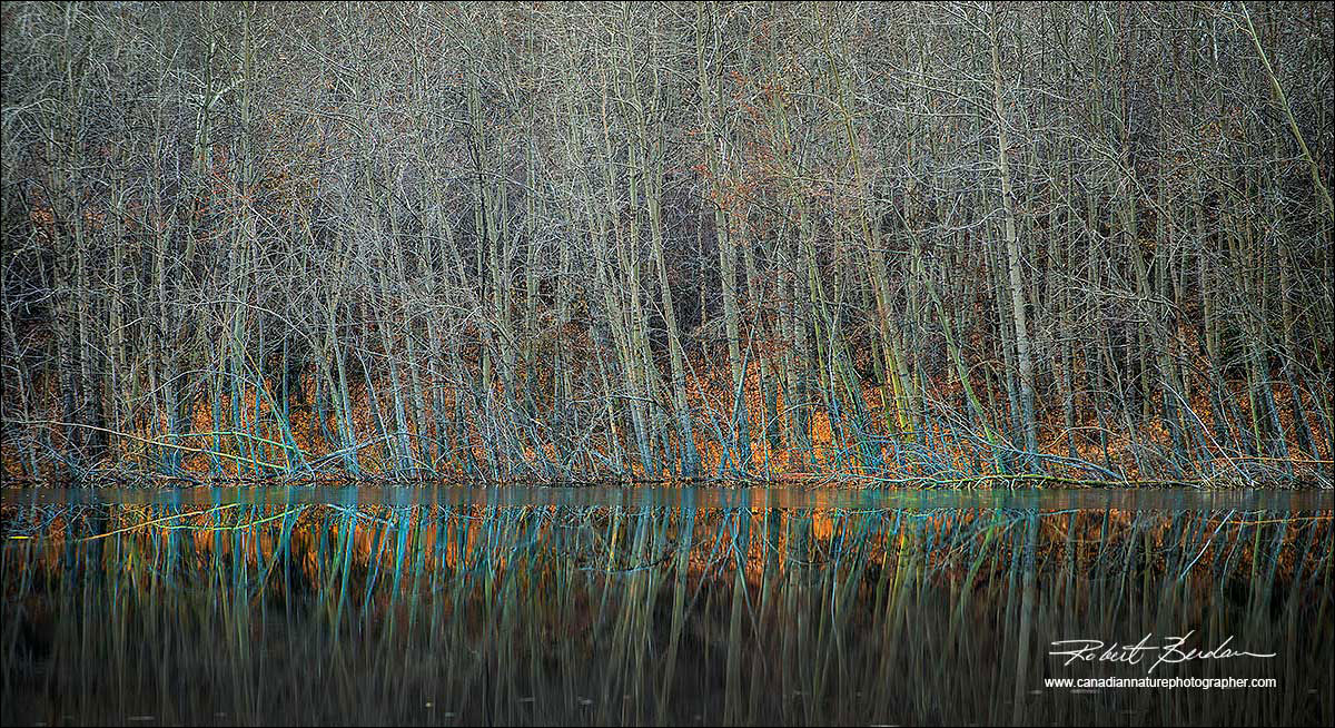 Autumn trees and pond by Robert Berdan ©