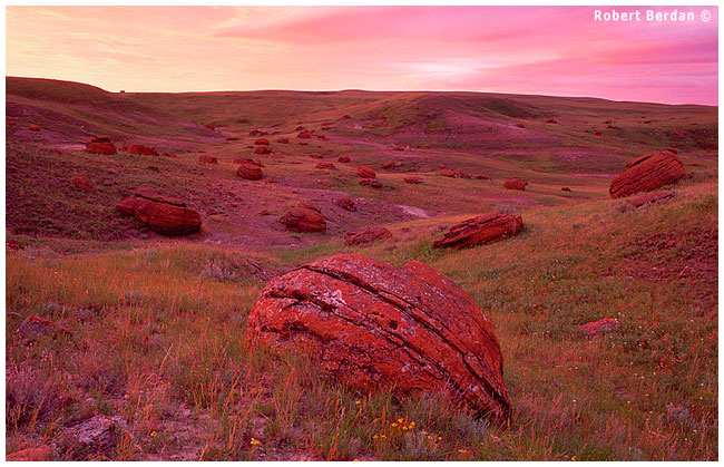 Field of Red Rocks before sunrise Red Rock Coulee by Robert Berdan ©