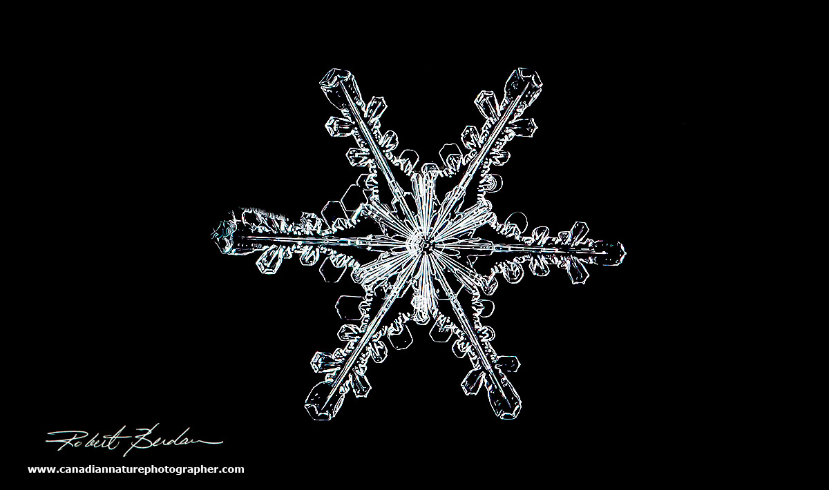 Snowflake Gallery The Canadian Nature Photographer