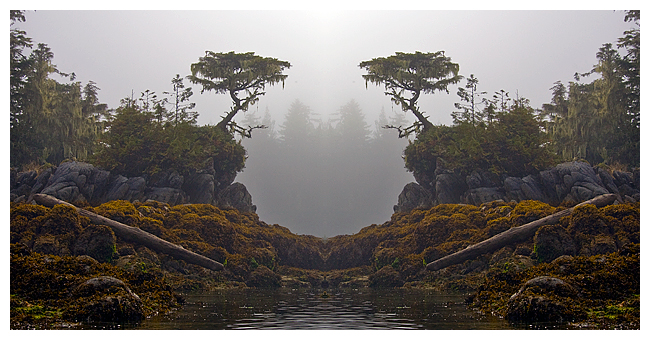 Bilateral symmetry in landscape by Robert Berdan ©