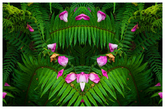 Bilateral symmetry in ferns by Robert Berdan ©