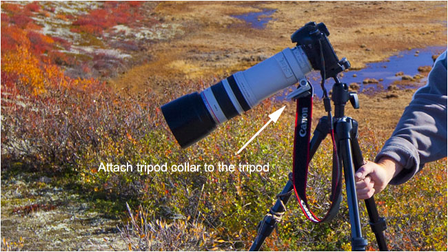 How not to attach your lens to your tripod by R. Berdan