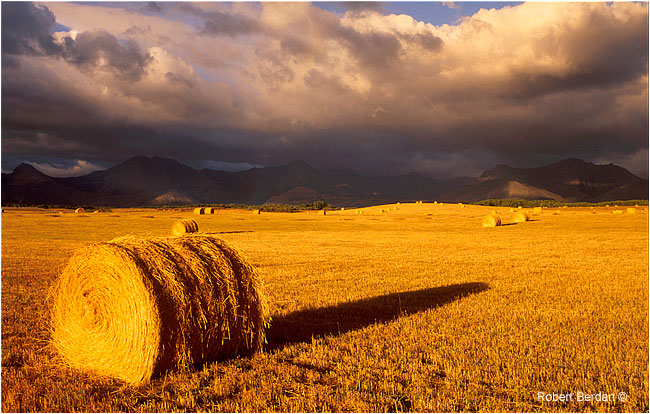 Hay bail near Waterton National Park by Robert Berdan