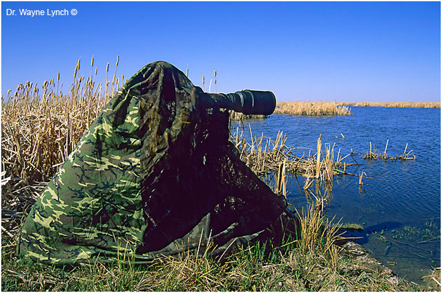 Wyne Lynch in a pocket blind at the edge of a marsh
