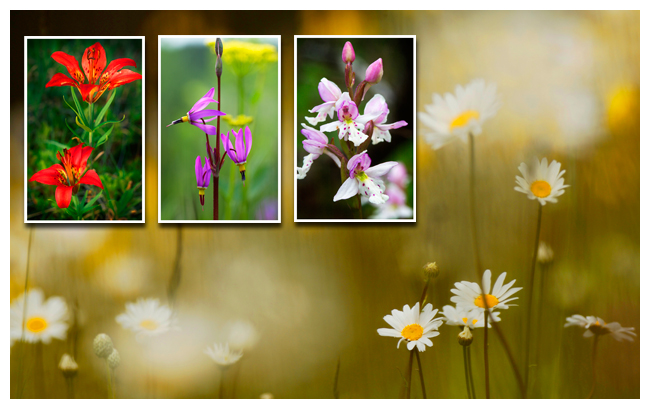 Wildflower collage by R. Berdan ©
