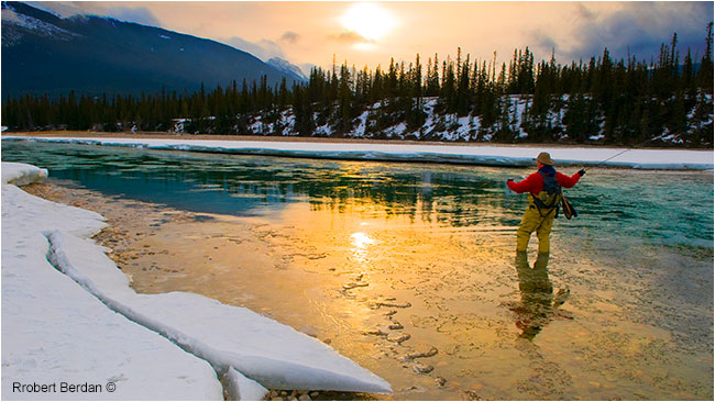 Frank Wood fly-fishing on the Athabasca river in winter Jasper National Park by Robert Berdan ©