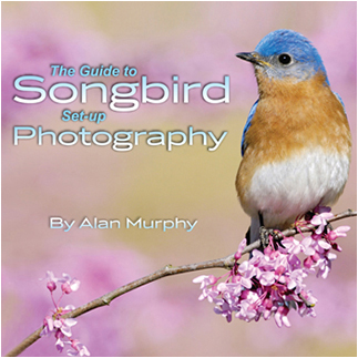 Guide to Songbird set-up Photography by Alan Murphy ©