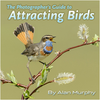 Photographers guide to attracting birds by Alan Murphy ©