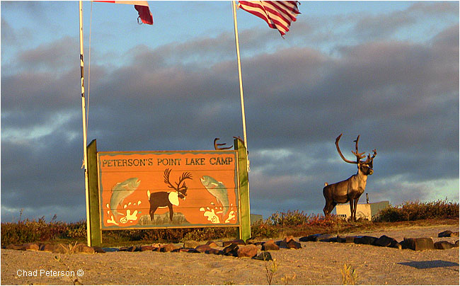 Caribou in front of Petersons Point Lake lodge welcome sign by Chad Peterson ©
