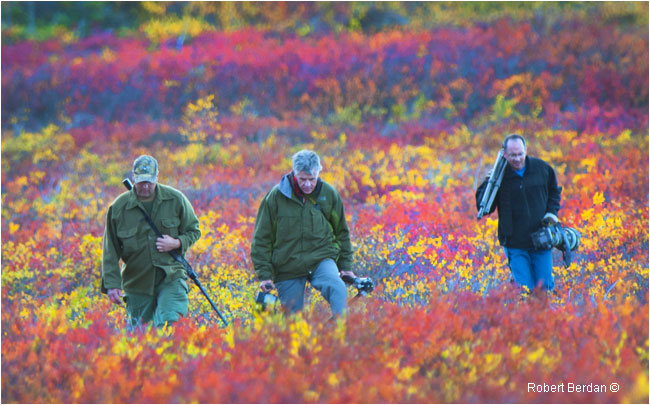 Bruce Weber, Wayne Lynch and Rob Kerr hiking on the tundra with camera gear by Robert Berdan ©