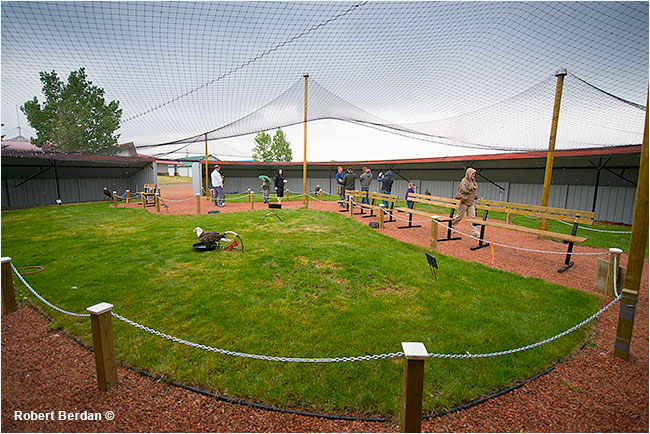 Eagle aviary at Birds of Prey Center Coaldale Alberta by Robert Berdan ©