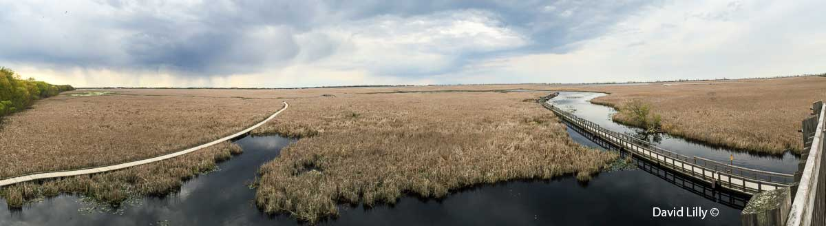 Panoramic Photo of the marsh taken with an iphone by David Lilly ©