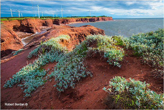 North Cape, PEI showing windmills by Robert Berdan ©