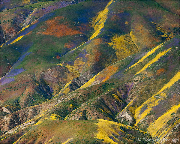 Monet's Palette  - Carrizo Plains National Monument, CA by Floris van Breugel ©